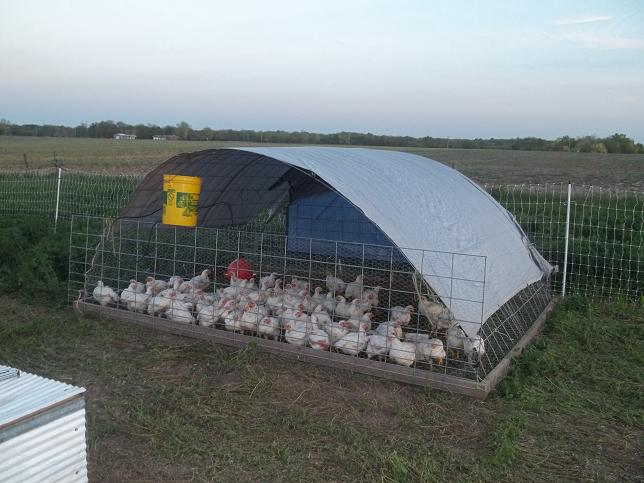 How big to make a chicken tractor for Big chicken tractor