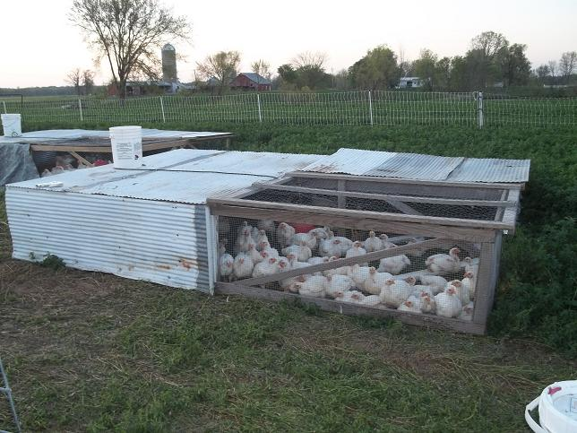 The whole fleet chism heritage farm for Moving chicken coop plans