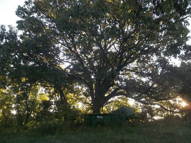 Grandpa Tree