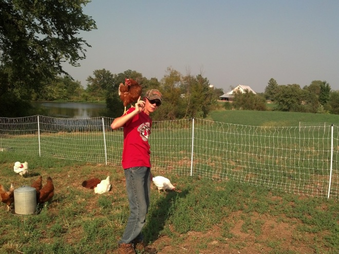 chickens are cool