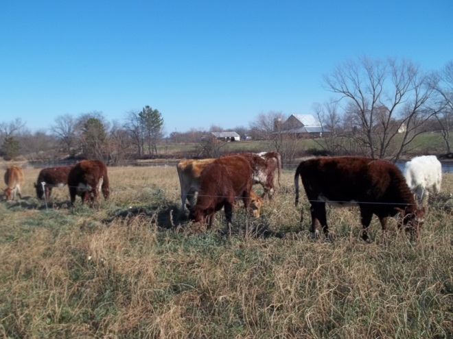 StripGrazing2