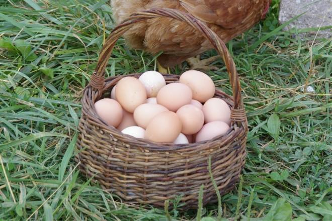 egg sale 3