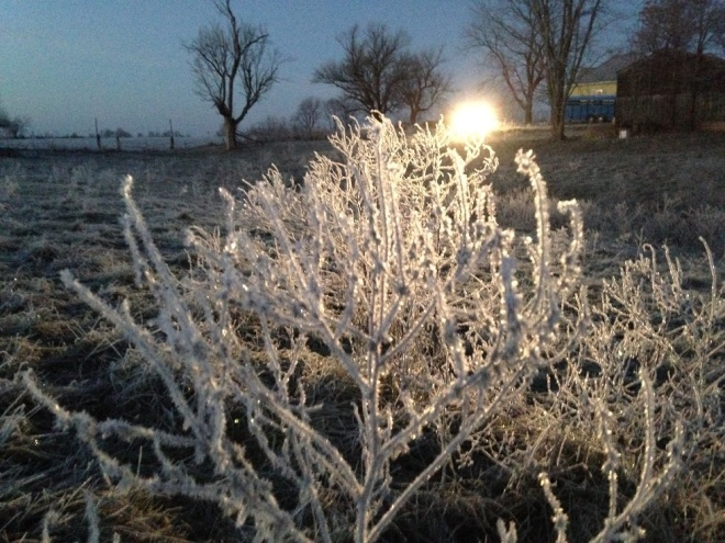 FrostyWeeds