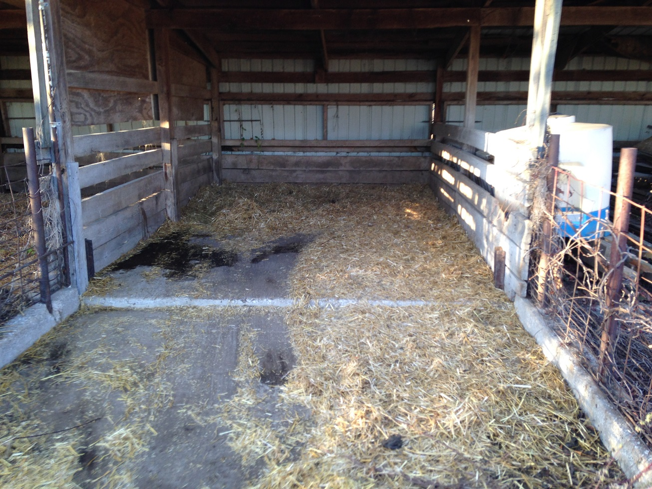So We Move The Pigs To Their New Bay And Clean Old One Making A Compost Pile At Front Of Can Shovel It Out Easily Enough