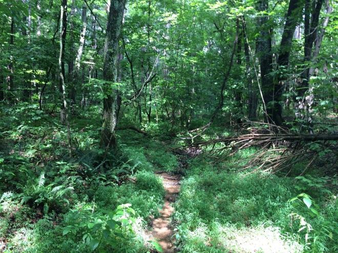 Trail9